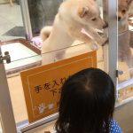 うめ子と犬