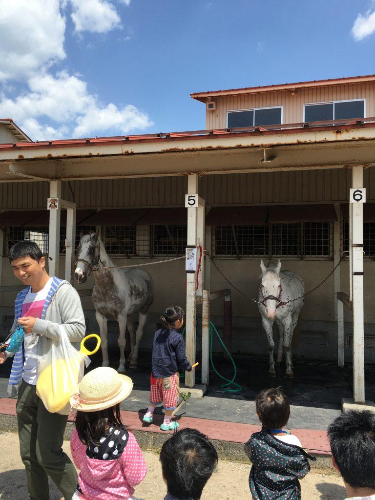 エサやりコーナーのお馬さんたち