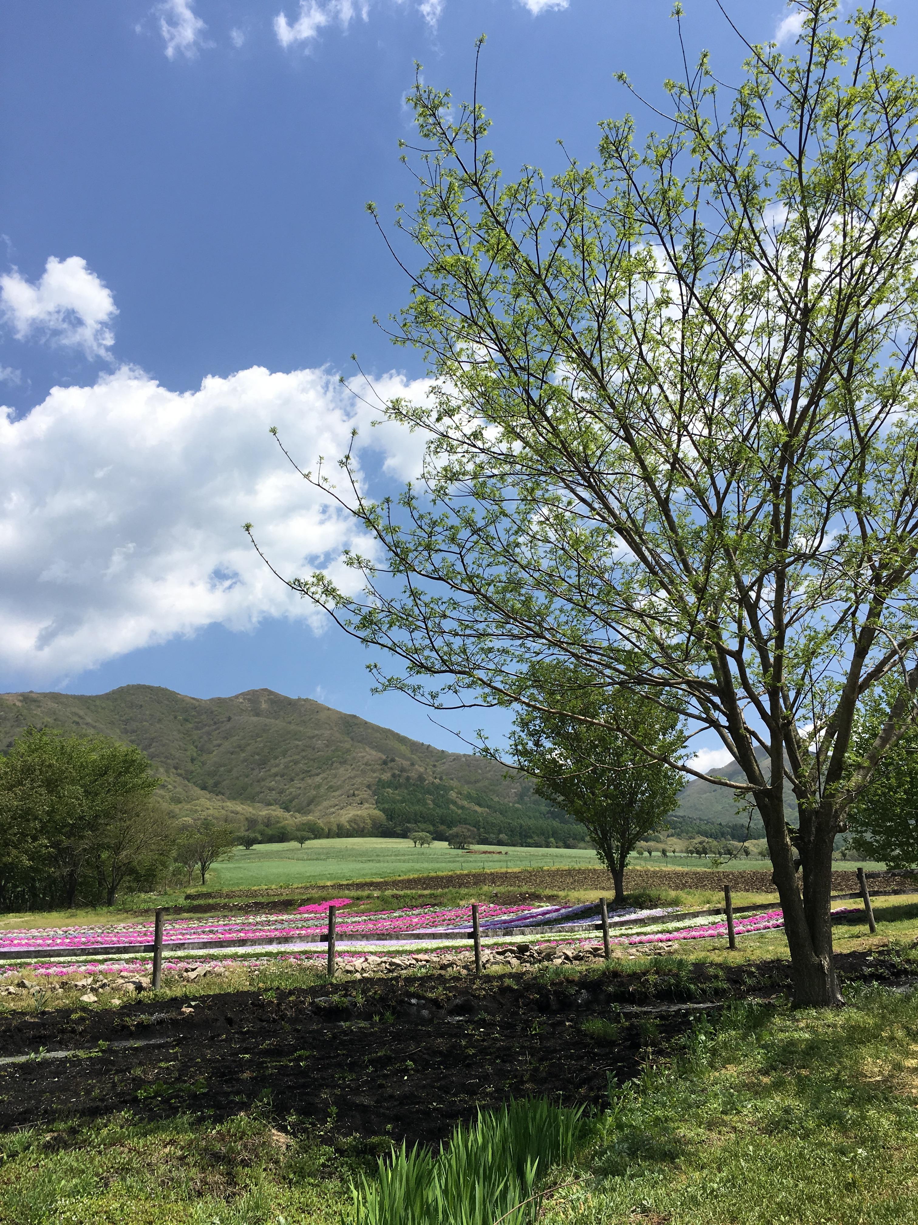 蒜山高原の景色