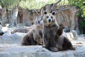 動物園のくま