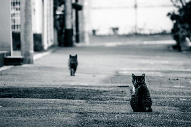 距離のある猫