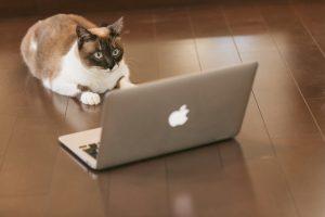 ネットサーフィン猫