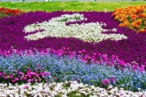 うさぎの花壇