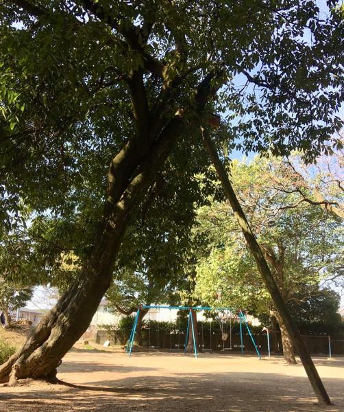 『人』という字に見える木