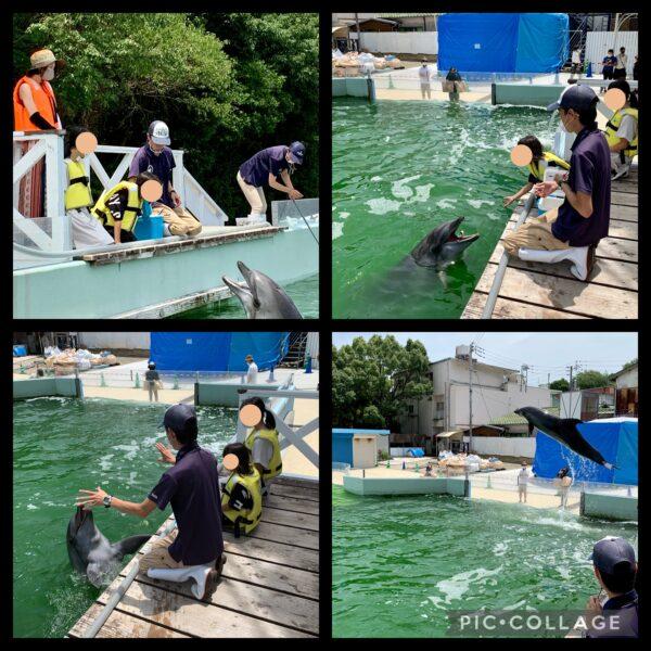 新屋島水族館イルカトレーニング