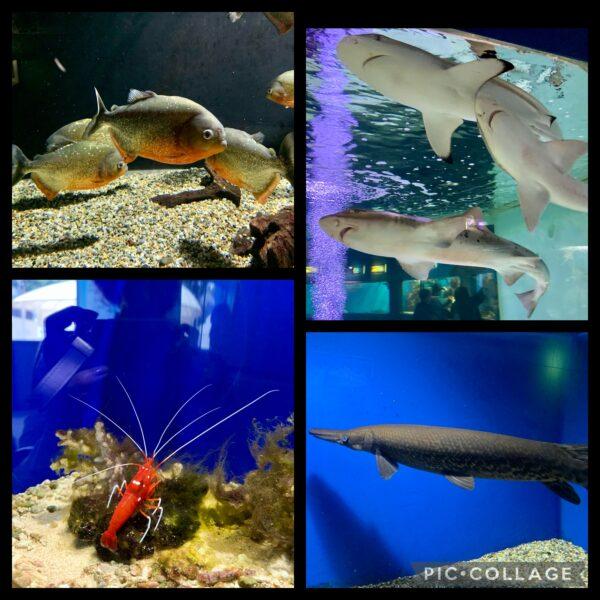 新屋島水族館のお魚たち