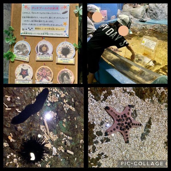 新屋島水族館タッチプール
