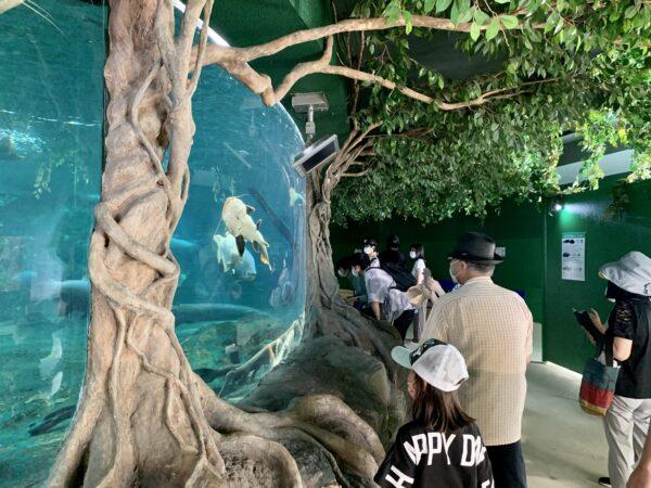 新屋島水族館展示