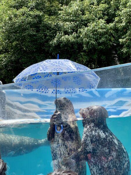 新屋島水族館アザラシの相合傘